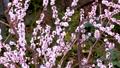 メジロと梅の花、日本の春の風景 63122194