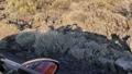 Car shadow on the roadside 63174002