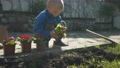 the boy is planting flowers 63212189