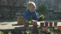 the boy is planting flowers 63212190