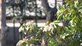 花の蜜を吸うメジロ 63212639