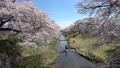 藤田川ふれあい桜(福島県・郡山市) 63213085
