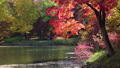紅葉 池のほとり(フィクス撮影) 63233973