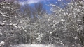 Beautiful landscape with snow falling from covered branches in winter forest, 4k 63410092