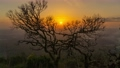 Bare branches of old tree on sunset background 63493238