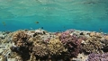 Many fish swim among corals in the Red Sea, Egypt 63493278