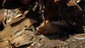 Snake in the wild, Wildlife shot, Dangerous Grass-snake on Wood 63579223