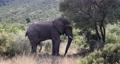 Elephant in Pilanesberg, South Africa wildlife safari. 63601271