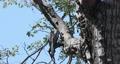 bird red-billed hornbill, Namibia, Africa wildlife 63601296