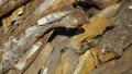 Snake in Nature, Wildlife shot, Dangerous Grass-snake on Wood 63609342