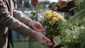 young girl chooses home blooming potted flowers, female hands examine flowering plants in greenhouse, close-up 63613965