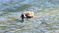 Duck feeding 63767794