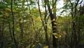 秋の石鎚山の森 63938128