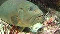 Underwater Makbu 63938136