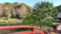 Cherry blossoms at Kanazawa Ward, Kanazawa Ward, Kanagawa Prefecture 64074368
