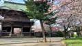 Cherry blossoms at Kanazawa Ward, Kanazawa Ward, Kanagawa Prefecture 64074369