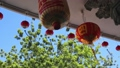 Chinese new year lanterns in china town. Ancestor Worship on Chinese New Year and burning paper gold. 64262648