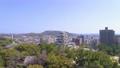 福山城 桜 64309986