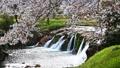 布橋十二ヶ滝(ぬのはしじゅうにがたき)/石川県小松市 西尾地区  64359205