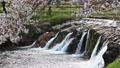 布橋十二ヶ滝(ぬのはしじゅうにがたき)/石川県小松市 西尾地区  64359207