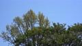 <イメージ>風になびく木々(フィクス撮影) 64775055