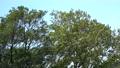 <イメージ>風になびく木々(フィクス撮影) 64775056