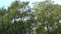 <イメージ>風になびく木々(フィクス撮影) 64775059