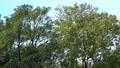 <イメージ>風になびく木々(フィクス撮影) 64775060