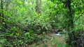 Impenetrable Rainforest Jungle Rain Forest Darien National Park Panama 65003505