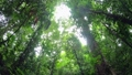 Trees Rainforest Jungle Rain Forest Darien National Park Panama 65003508