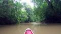 Paya River And Nature Rainforest Jungle Rain Forest Darien National Park Panama 65003510