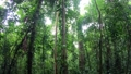 Thick Jungle Rainforest Rain Forest Darien National Park Panama 65003512