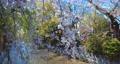 4K 日本 京都 桜 美しい古都 電動ジンバルで撮影,滑らかで浮遊する動き 65031795