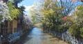 4K 日本 京都 桜 美しい古都 電動ジンバルで撮影,滑らかで浮遊する動き 65031797