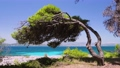 4k shot of bent over pine tree over the rocky shore, crystal clear turquoise water on greek island, Greece Vacation, summertime, mediterranean nature and seashore 65308049