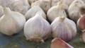 Fresh raw rustic eco garlic with segments 65337977