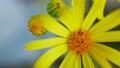 Yellow Blooming Flowers in Wild Field 65337981