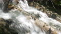 Mountain Stream in Green Forest 65341158