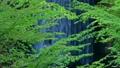 産ヶ沢の新緑 65346907