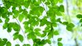 新緑の葉 65347246