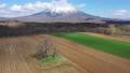 双子のさくらんぼの木と羊蹄山 ドローン空撮 / 北海道ニセコの観光イメージ 65391352