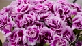 White Violet Blooming Carnation Flowers Bouquet 65465725