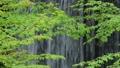 土湯温泉町産ヶ沢の新緑 65468334