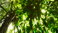 Sun shines through the tree green leaves. 65495955