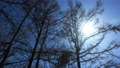 Forest in the forest, flowing clouds and the sun Timelapse 65513764