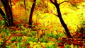 Colorful forest with autumn leaves 65513838