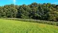 草原 北海道 ドローン ドリーアウト 4K イメージ映像 65637355