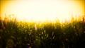 wild field flowers at summer sunset 65698877
