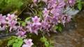ツツジ咲く初夏の水辺風景 65832757