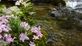 초여름의 물가 풍경 65832950